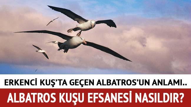 Albatros kuşu özellikleri, efsanesi nedir? Erkenci Kuş'ta geçen Albatros ne demek, anlamı nedir?